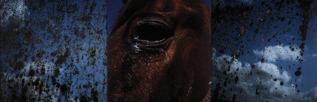 Horses Mirror, 2000