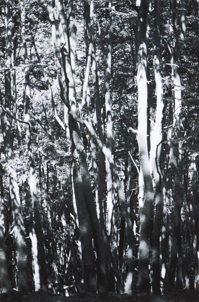 """""""Wald (Tierra del Fuego) II"""", 2010"""