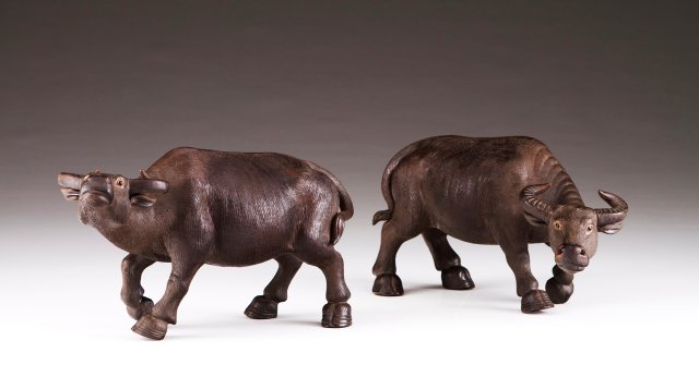 A pair of Asian buffaloes