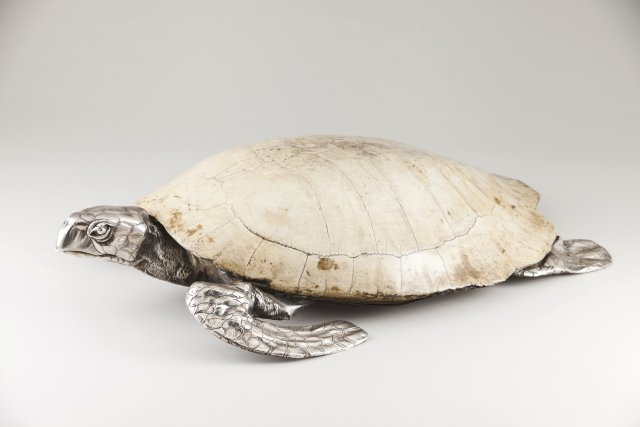 An unusual turtle