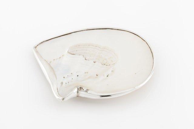 A small bivalve shell